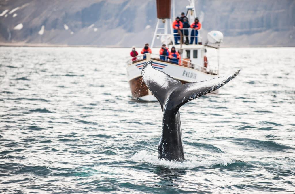Whale Watching in Norwegen