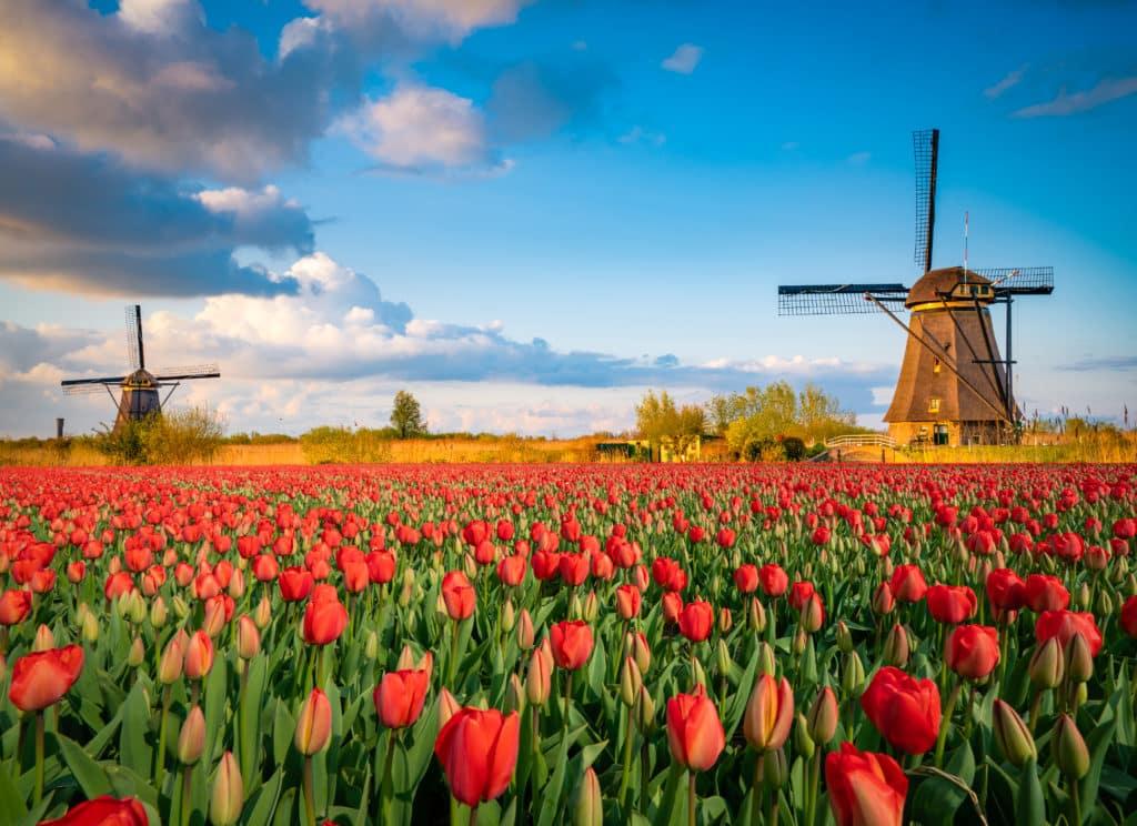 Windmühlen in Amsterdam