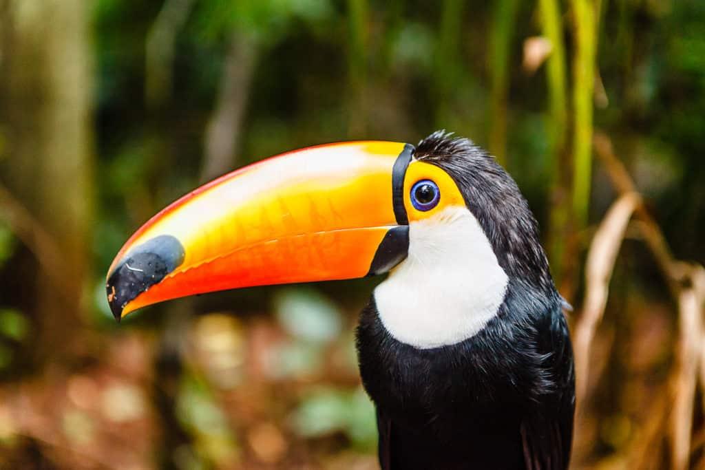 Vogelpark -Der Parque das Aves in Foz do Iguacu