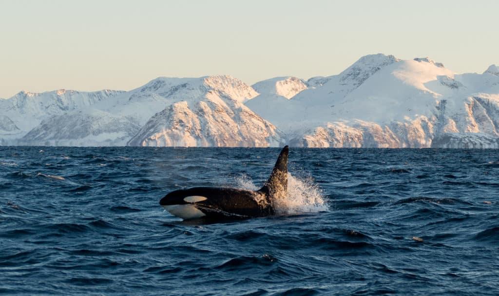 Whale Watching in Kanaren