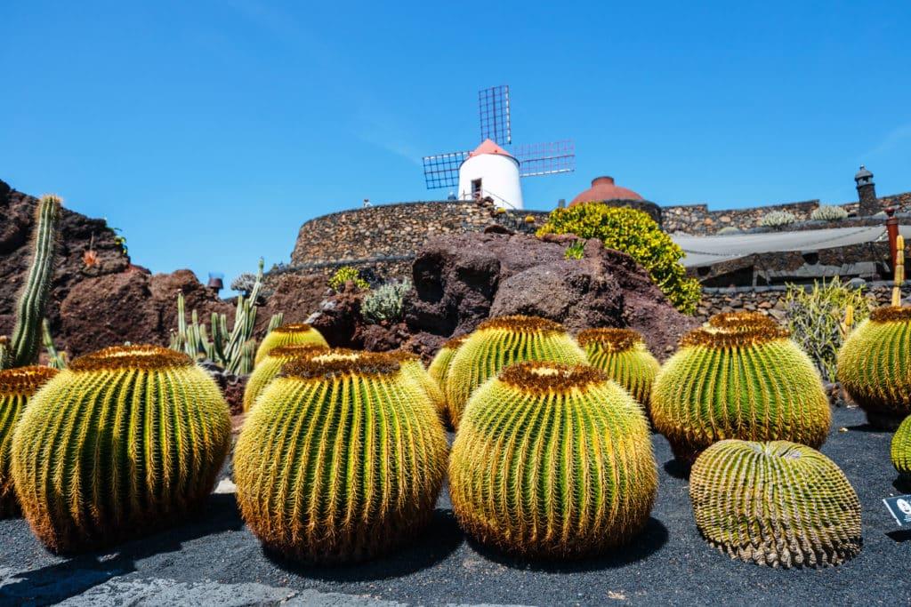 Lanzarote's Flora