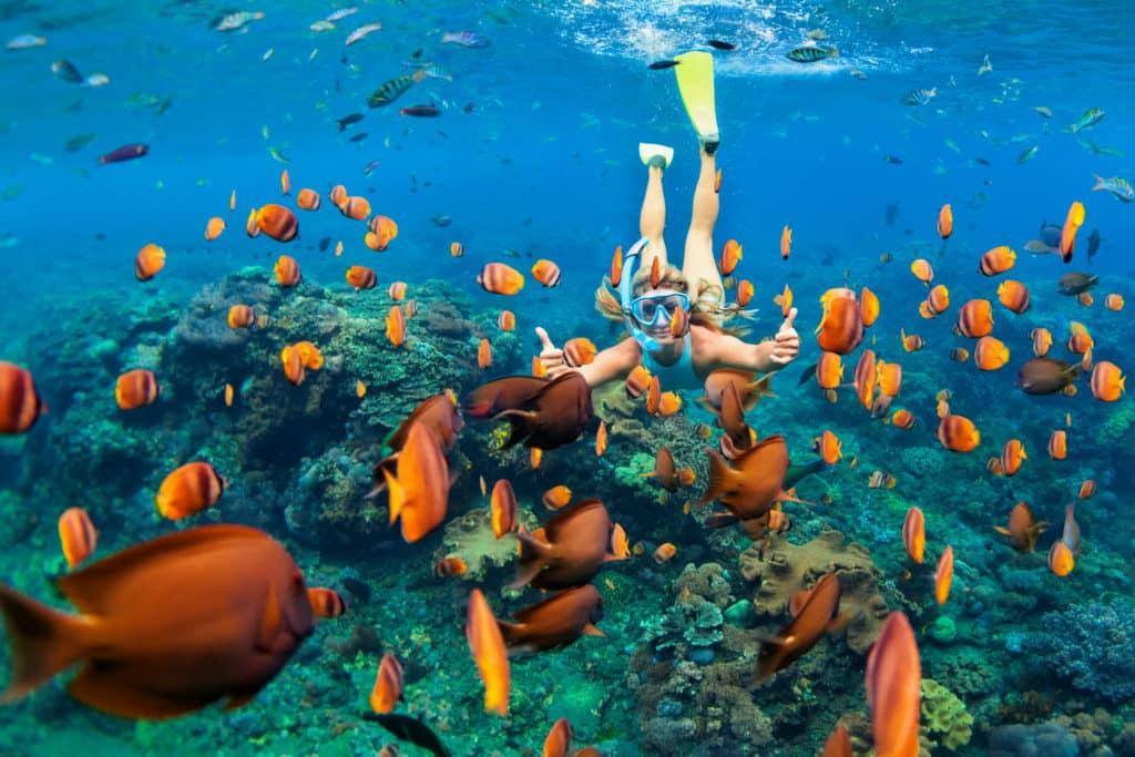 Tauch- und Schnorcheltouren in Nassau